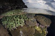 Récif corallien poussant en eau peu profonde — Photo de stock
