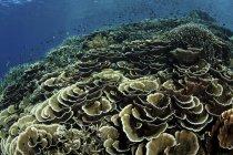Récif corallien dans le parc national de Komodo — Photo de stock