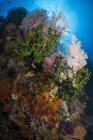 Abanico de mar sobre coral suave - foto de stock