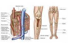 Анатомія людини кісткового етикетки — стокове фото