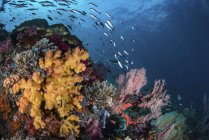 Soft corals on reef with fish — Stock Photo