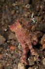 Polpo di ocra su fondo roccioso — Foto stock