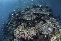 Récif corallien coloré recouvert de poissons — Photo de stock