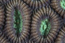 Pólipos de coral tiro de primer plano - foto de stock
