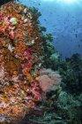 Coralli molli e pesci sulla barriera corallina — Foto stock