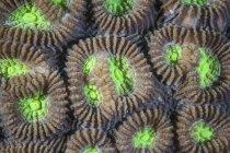 Pólipos de coral arrecifal — Stock Photo