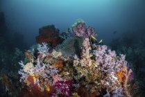 Arrecife con corales blandos y anémonas - foto de stock