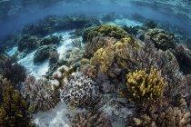 Arrecife lleno de corales blandos - foto de stock