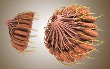 Ilustración médica de la anatomía de mama femenina - foto de stock