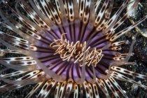 Bunte Röhrenanemone auf sandigem Boden — Stockfoto