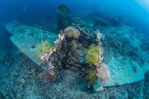 Choque de avión en arrecife con corales blandos, Bahía Cenderawasih, Papúa Occidental, Indonesia - foto de stock