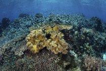 Colorido arrecife de coral cerca de Alor - foto de stock