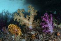 Coralli molli che crescono sull'isola di calcare — Foto stock