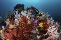 Esponjas entre corales blandos y peces - foto de stock