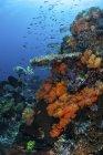 Coraux mous et durs sur le récif — Photo de stock