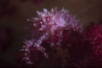 Soft coral crab closeup shot — Stock Photo