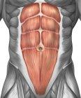 Vista de cerca de los músculos abdominales masculinos - foto de stock