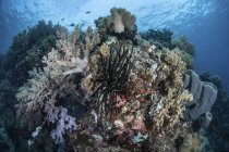 Diverse corals covering healthy reef in Indonesia — Stock Photo