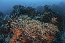 Corales balanceantes actuales en el arrecife - foto de stock
