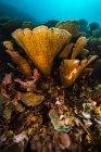 Récif corallien coloré à Raja Ampat — Photo de stock