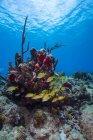 Arrecife de coral en Saint Croix - foto de stock