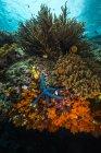 Коралловый риф в Раджа-Ампате — стоковое фото