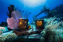 Doc Polson wreck in Grand Cayman — Stock Photo