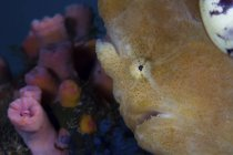 Primer plano vista recortada de rana amarilla Longlure - foto de stock