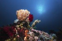 Colección de crinoides, esponjas y corales en arrecife - foto de stock