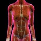 Женская грудь и брюшных мышц на черном фоне — стоковое фото