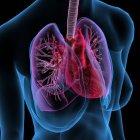 X-Ray вид женской груди с сердца и легких на черном фоне — стоковое фото