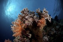 Daytime view of hard and soft corals on reef — Stock Photo