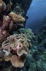 Sea anemone and reef, Farasan Banks, Mar Mar Mar Island, Saudi Arabia — стоковое фото