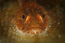 Vista frontal de primer plano de la cabeza de pescado esculpido - foto de stock