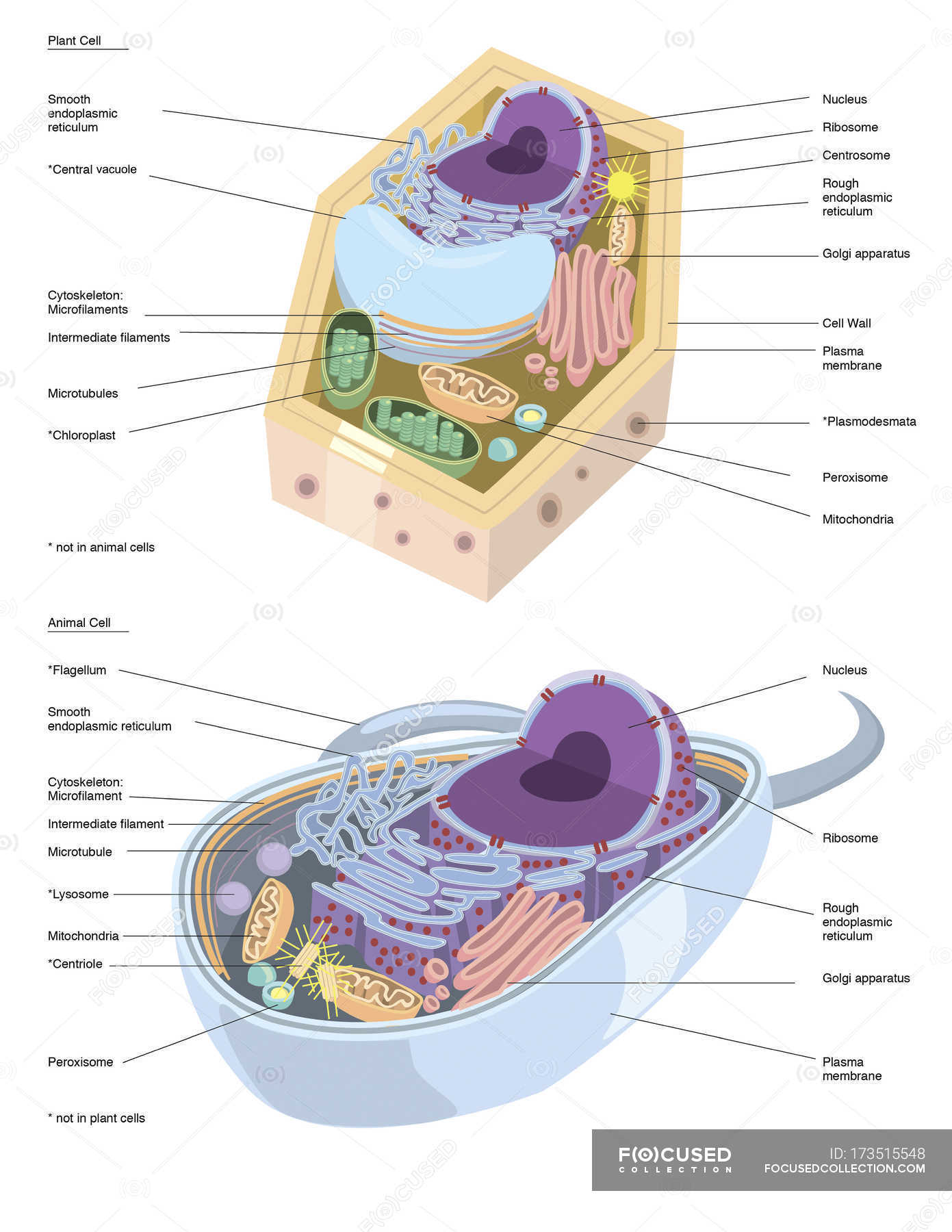 Plant and animal cell anatomy — Stock Photo | #173515548