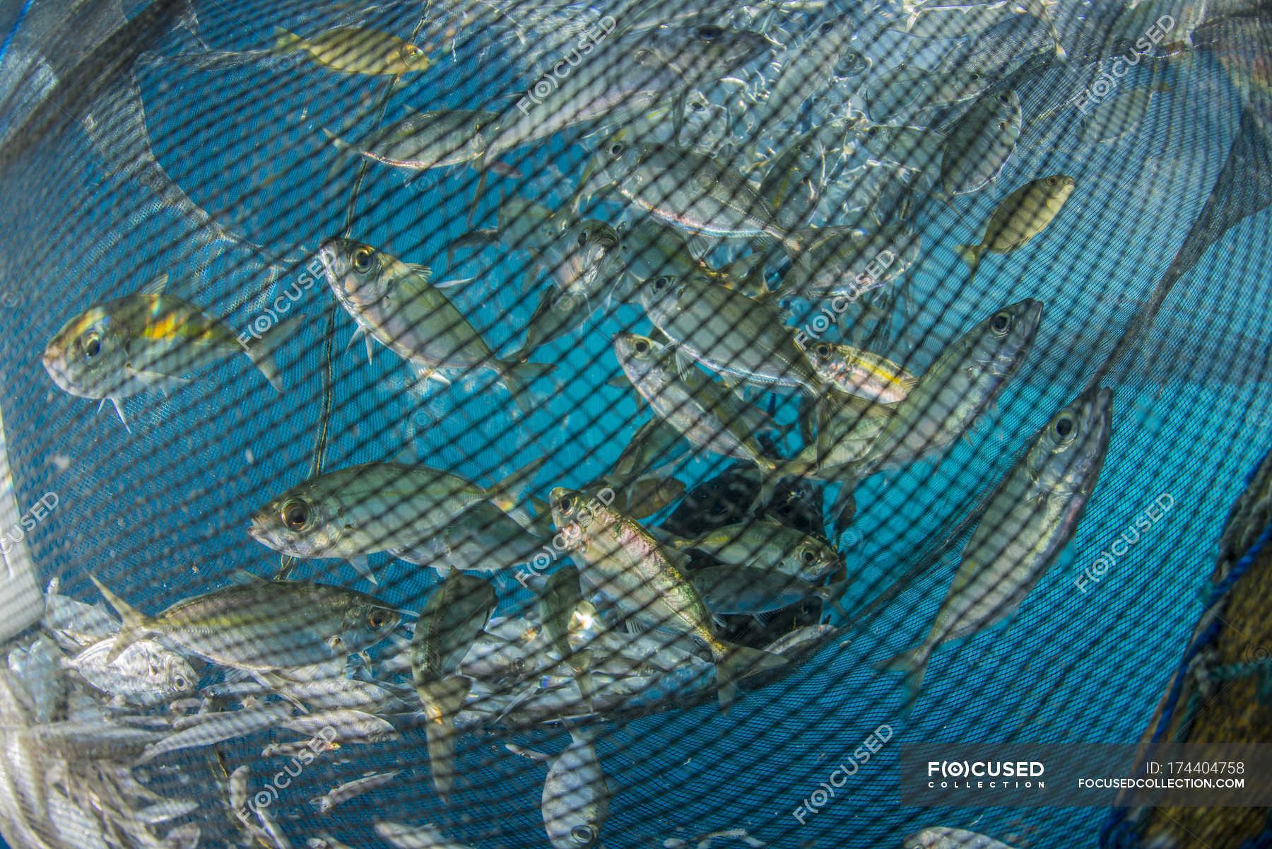 Asia Oceanic-Euipment Used For Fishing,Fishing Net,Fishing