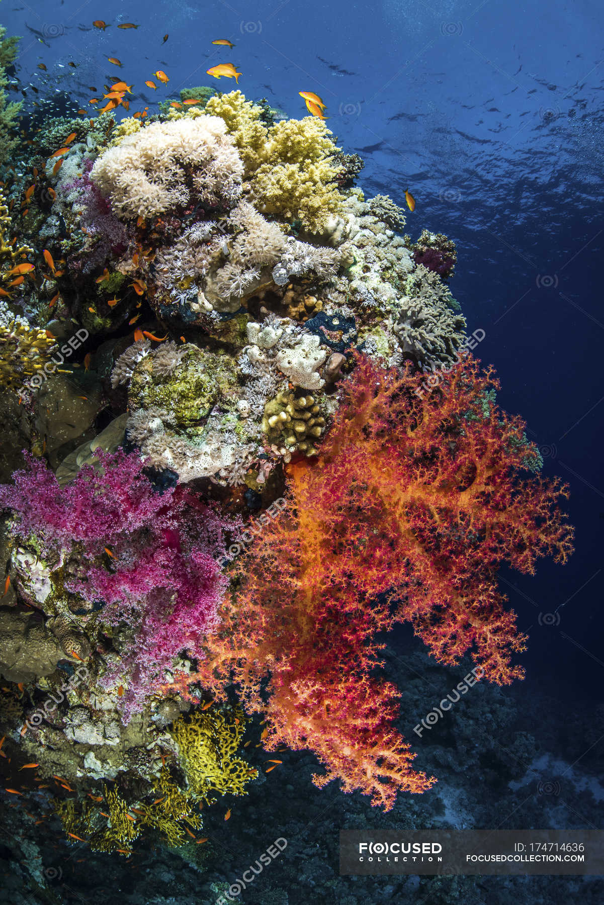 Colorful reefscape with fish — Stock Photo | #174714636