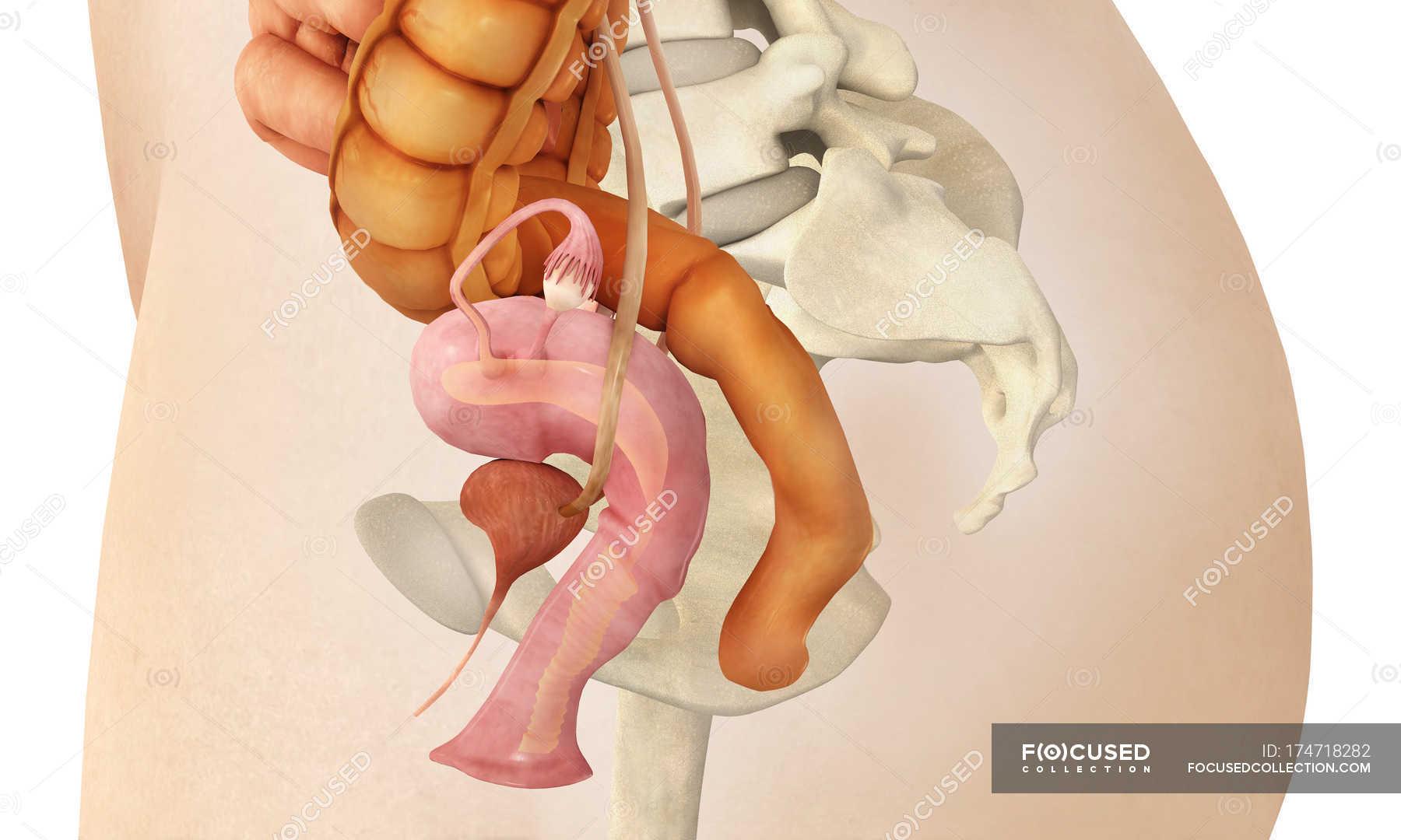 Смотреть женский половой орган, Откровенная демонстрация женских половых органов 20 фотография