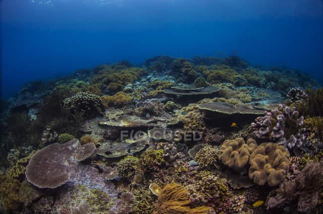 Reefscape in Banda Sea — Stock Photo