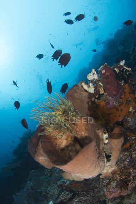 Сцена с рифом в Северном Сулавеси — стоковое фото