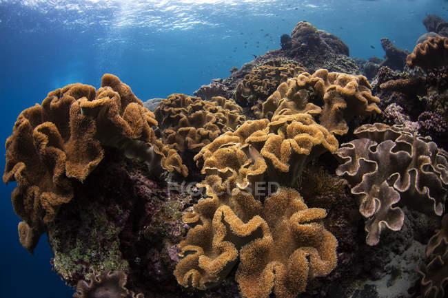 Korallen in bunten Riffen — Stockfoto