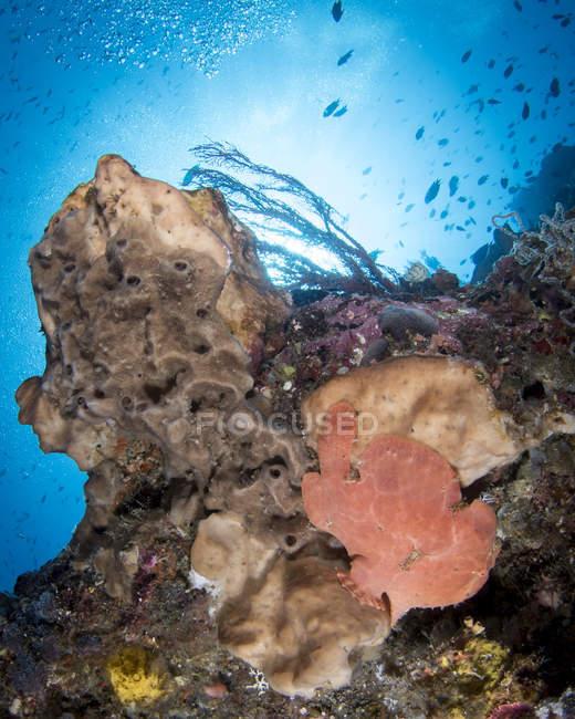Escena de arrecife con rana - foto de stock