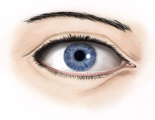 Anatomie des menschlichen Auges — Stockfoto