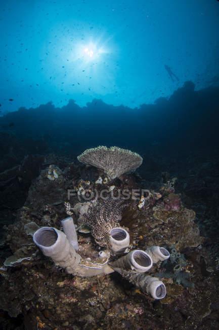 Escena del arrecife en el norte de Sulawesi - foto de stock