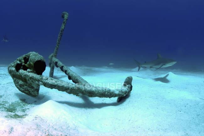 Якорь в Treasure Wreck с рифовой акулой — стоковое фото
