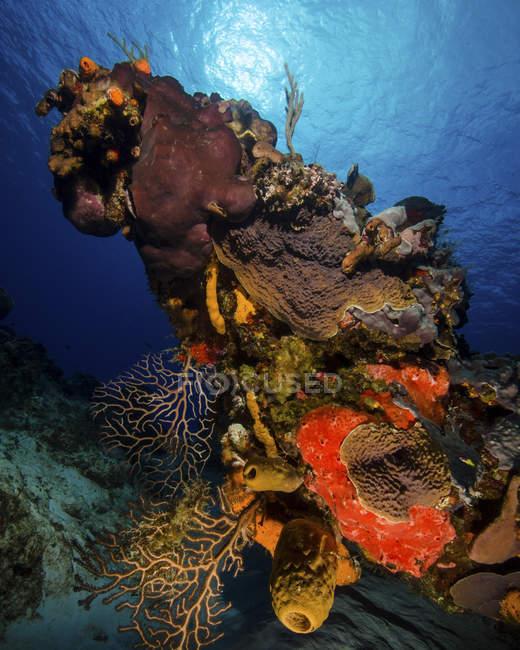 Scène de récif coloré avec coup de soleil — Photo de stock