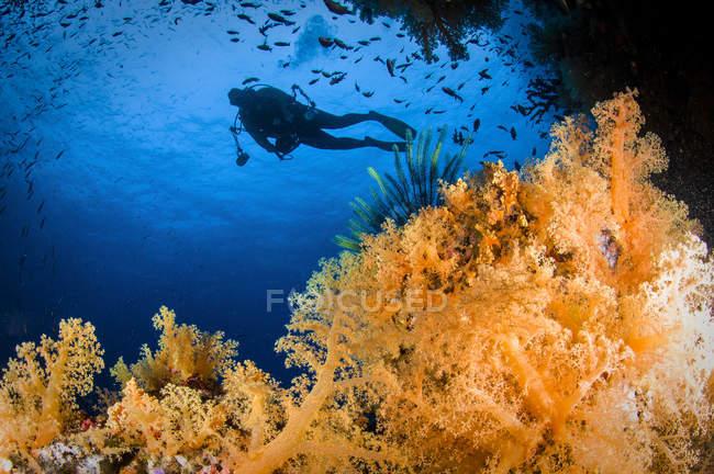 Buceador nadando sobre el arrecife de coral - foto de stock