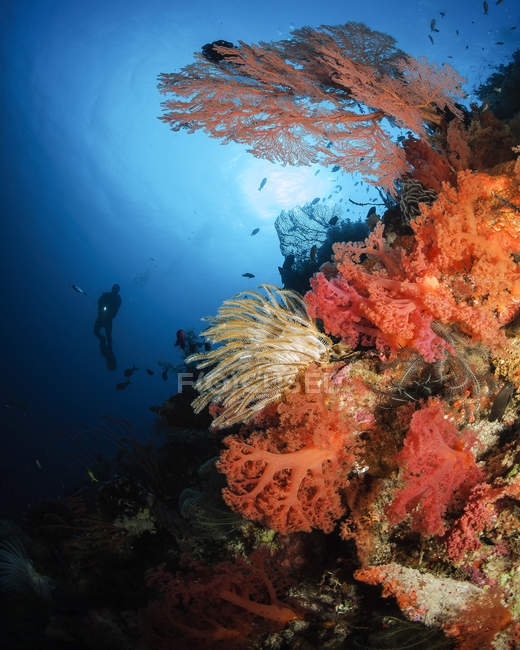 Diver swimming by soft coral reef — Stock Photo