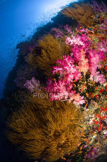 Чорний і м'яких коралів морський пейзаж — стокове фото