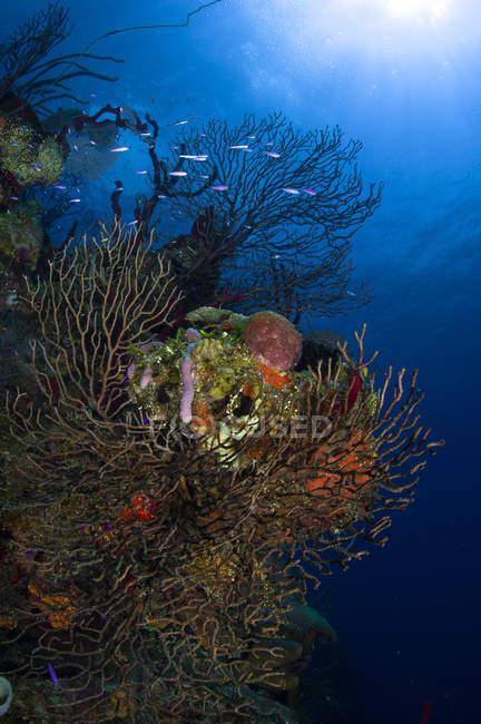 Paysage marin des fans de mer — Photo de stock